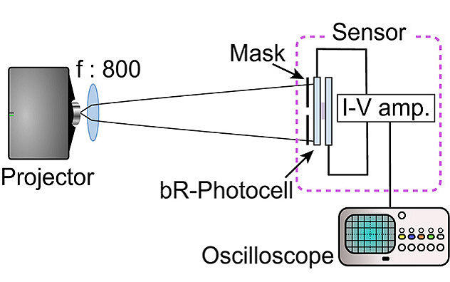 Experimental set-up of the bR photocell using different patterned masks.