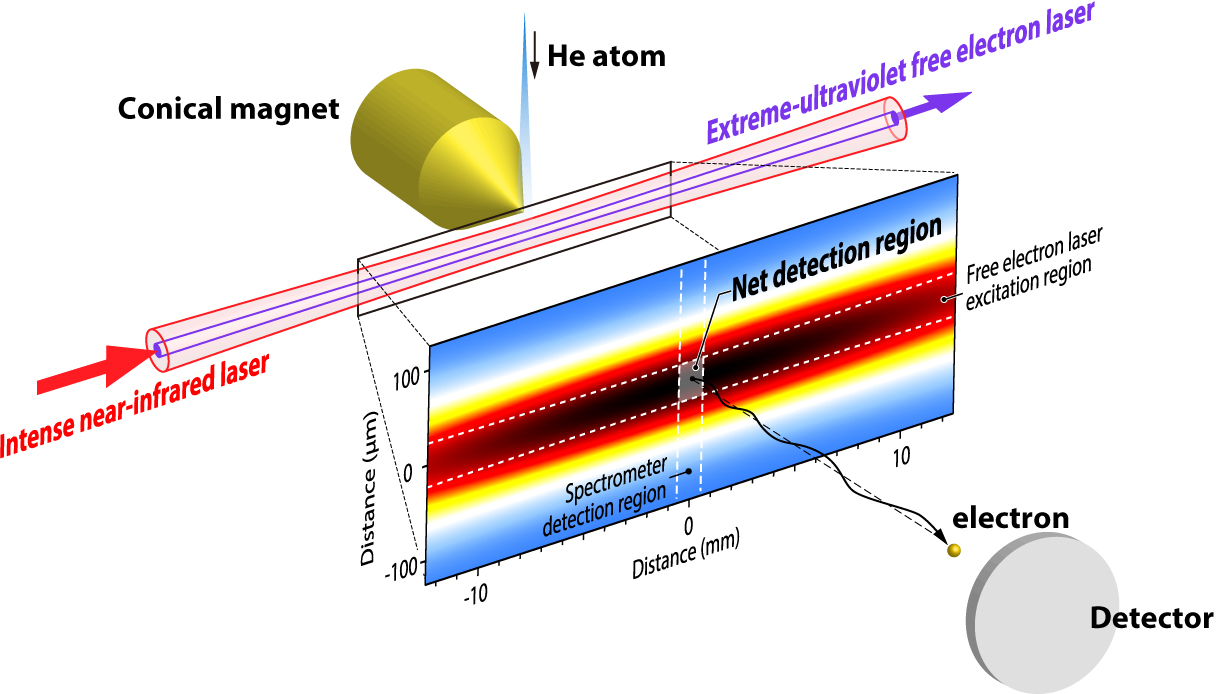 Observation of femtosecond two photon Rabi oscillations in helium