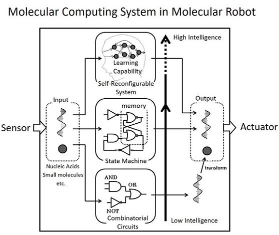 Innovative molecular robotics: Chemical reaction circuits for intelligent molecular robots